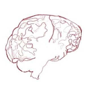 conocer nuestro cerebro