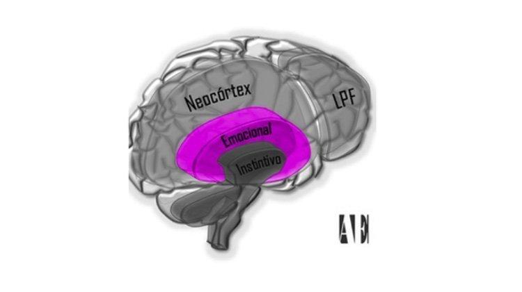 Cerebro Elefante.Emociones y memoria.